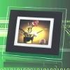 8 Inch Digital Photo Frame(DPF-003)